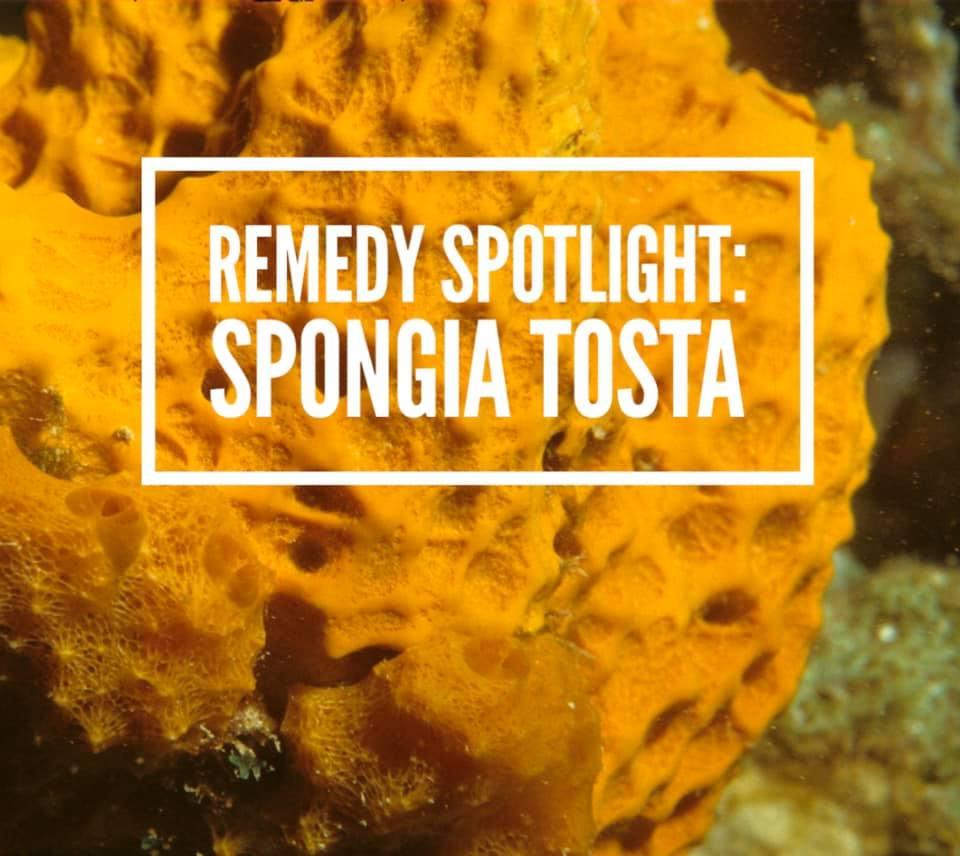Remedy: Spongia tosta