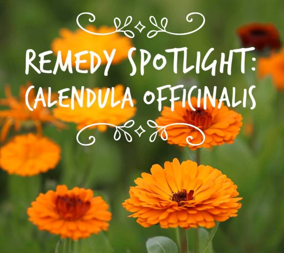 Remedy: Calendula Officinalis