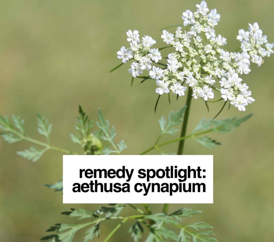 Remedy: Aethusa cynapium