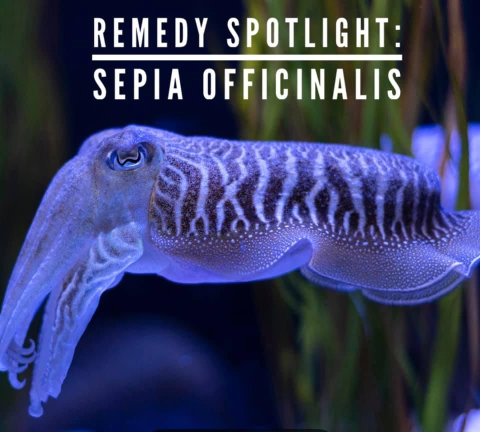 Remedy: Sepia officinalis