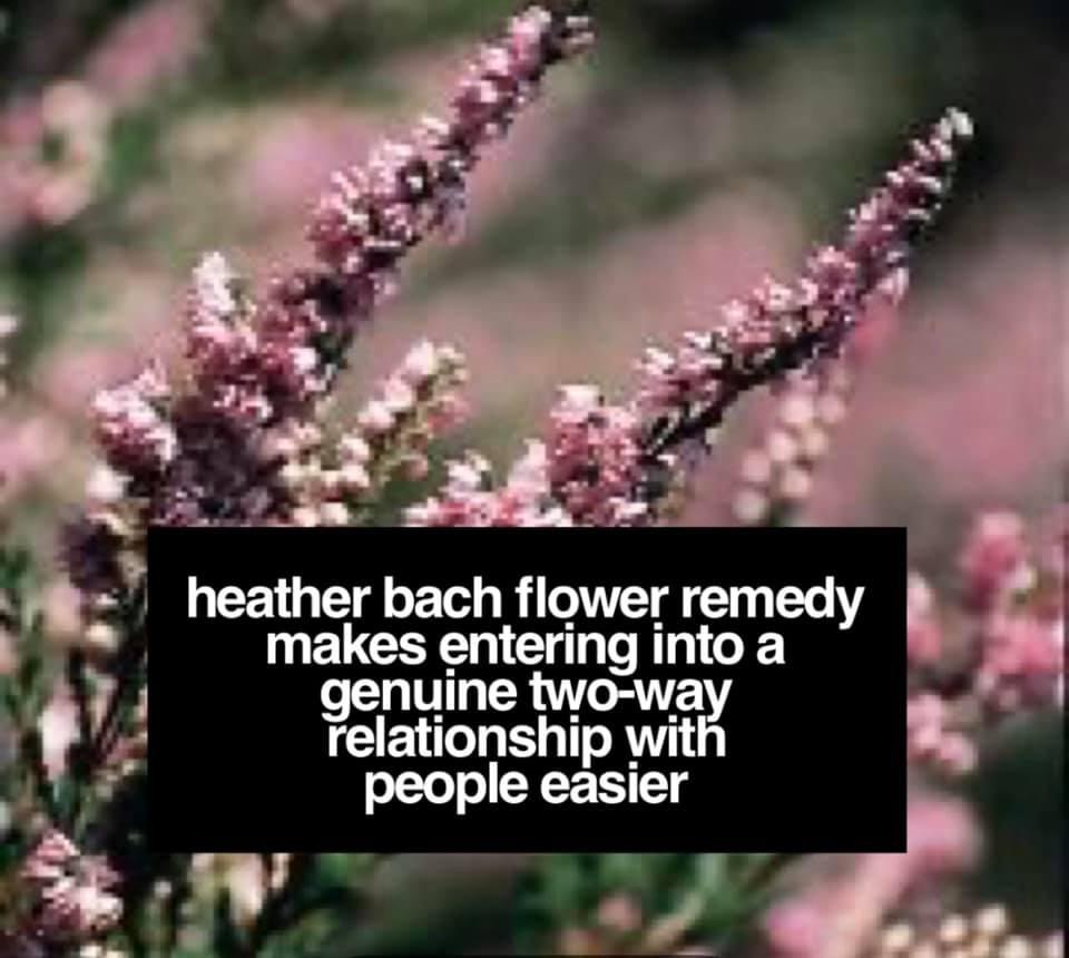 Heather Bach Flower Remedy